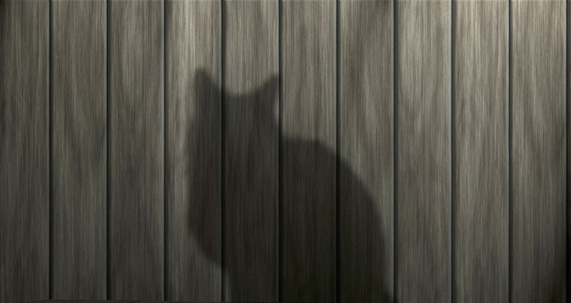A shadow of a cat visible on a fence.