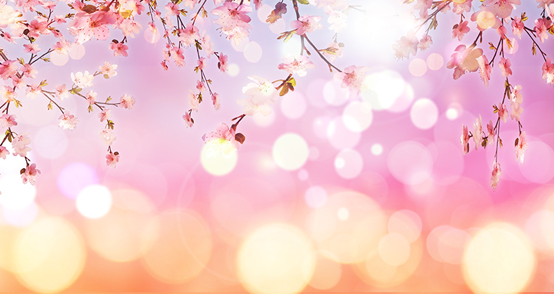 Blossoming branches with a bokeh effect in orange and pink colours.
