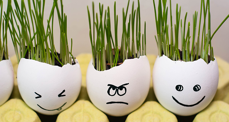 Chive growing in blown eggs with funny faces on them.