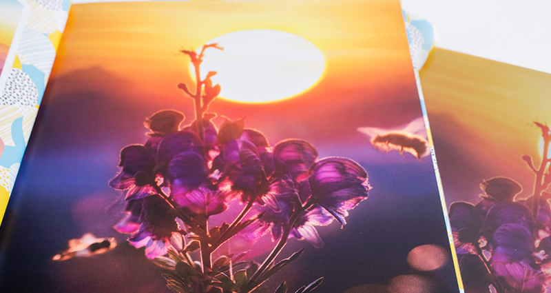 Comparison of two pictures showing a purple flower during the sunset. One book printed in 7C technology, the second one in a traditional way on our XEROX machine.
