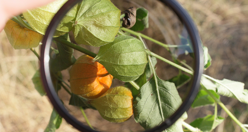 Focus on a polarizing filter with a plant with orange flower buds inside it