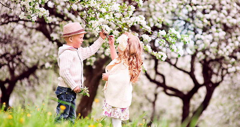 Kids in the orchard full of blossoming cherries