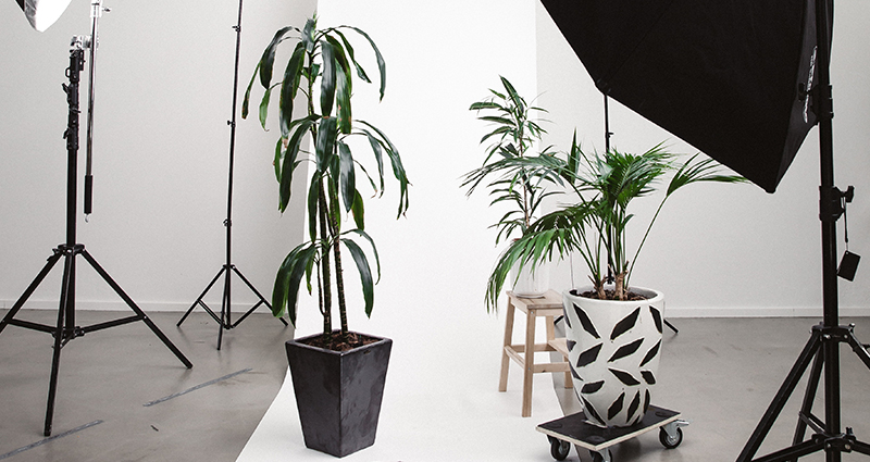 Photographic studio with lighting equipment, a white backdrop, flowers in black and white flower pots and a reflector