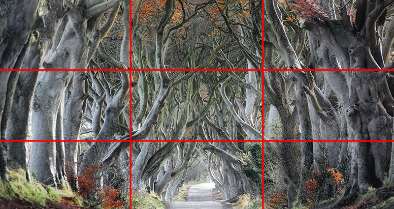 Picture of a path in the woods, frame divided into 9 pieces by the lines