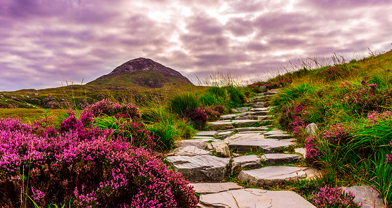 Stone path leading through the moors in Ireland, dark clouds in the background